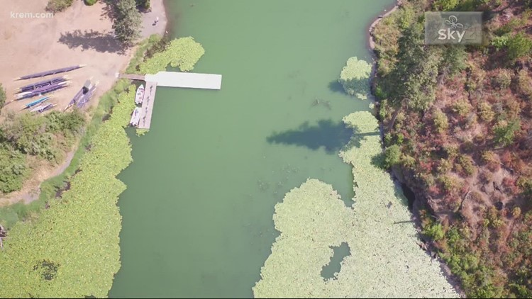 Health advisory issued for Priest Rapids Dam area due to blue-green algae after dog's death