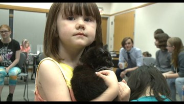 Downtown Spokane library wraps up 'Pet Week' with cat cafe