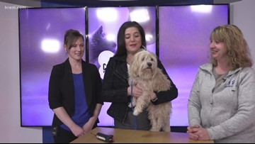 Meet this week's Pick of the Litter, Mr. Peabody!