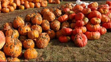 Your guide to picking the perfect Green Bluff pumpkin, apple