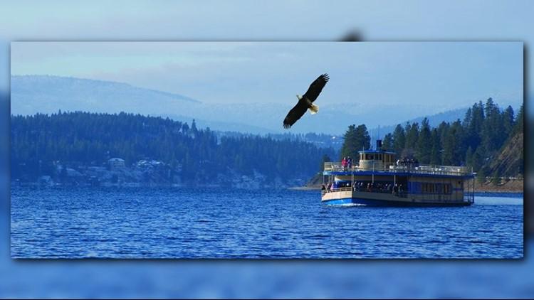 eagles tourist_1541110460353.png.jpg