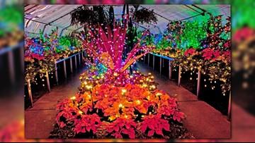 More than 30K Christmas lights return to Manito Park next Friday
