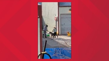 Spokane Valley worker who mistreated dog fired after viral video