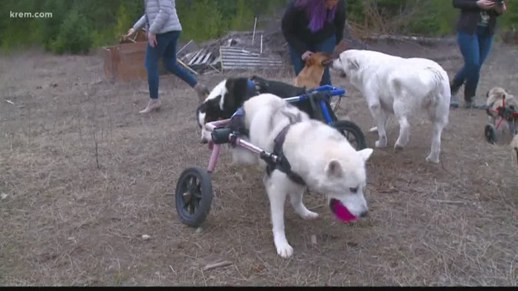 Heath's Haven Dog Rescue is the winner of 'Who Do You Love?'