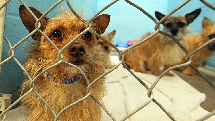 Kellogg police identify suspect who abandoned 85 dogs