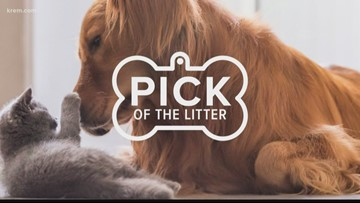 Meet this week's Pick of the Litter on Sept. 3, 2019!