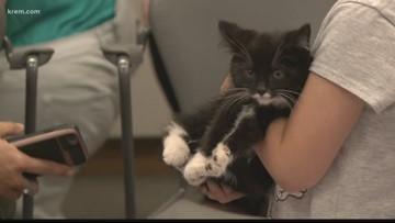 Spokane Public Library turned 'Cat Cafe'