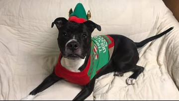Spokane Humane Society wants a home for 6-year-old dog before Christmas