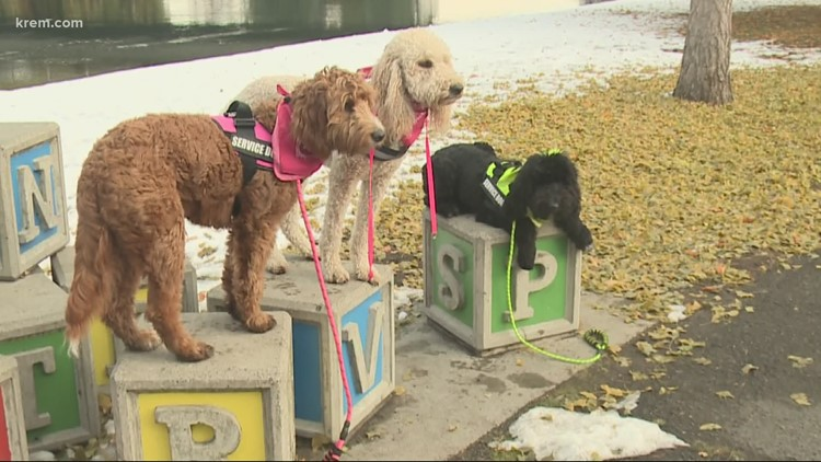 Dogology NW in Spokane trains dogs to help with PTSD, anxiety