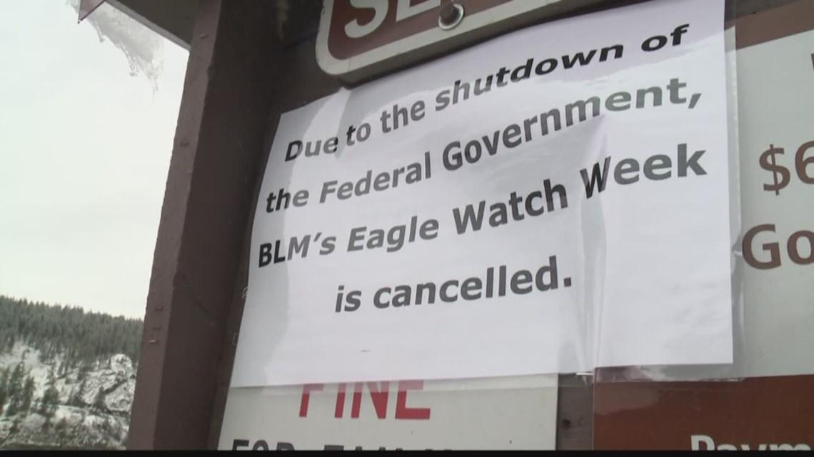 Gov't shutdown affecting Cd'A Eagle Watch