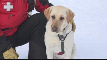 Meet Murphy, Schweitzer Mountain's avalanche dog in-training