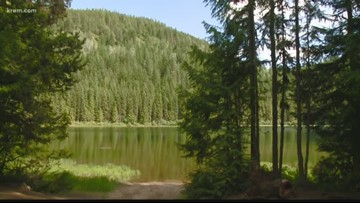 Man shoots, kills bear after it chased him up a tree in Pend Oreille Co.