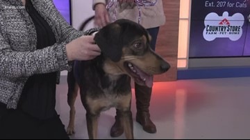 Meet this week's Pick of the Litter, Harley!