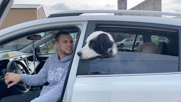 Three-legged dog from Spokanimal finds foster home during coronavirus outbreak