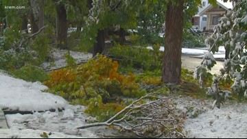 Downed trees after Spokane snowstorm make for messy morning commute