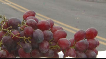 WSU researchers find way to use grape skins as road deicer