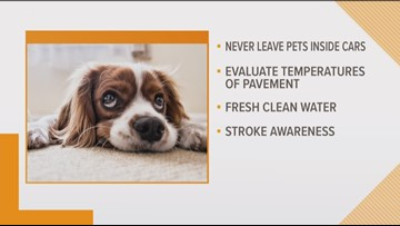 How to keep your pets safe from summer health hazards