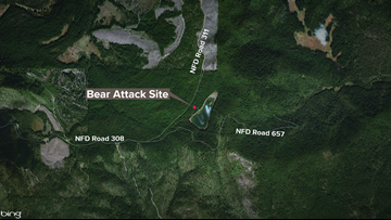 Man shoots, kills bear after it chased him up tree in Pend Oreille Co.