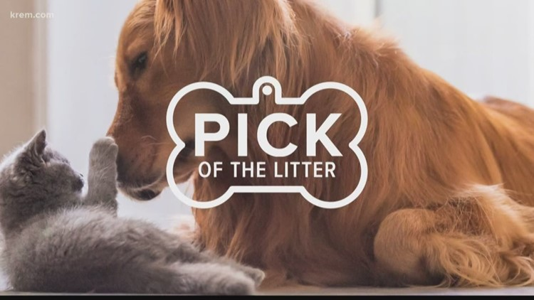 Meet this Week's Pick of the Litter, Disco!