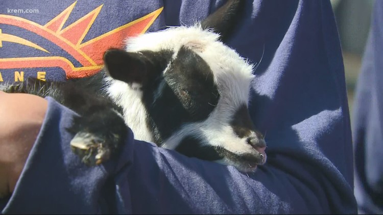 Spokane Shock and Wishing Star Foundation partnered to give the gift of goats