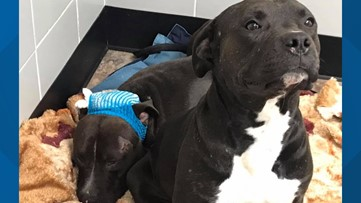 Two dogs who are best friends for life will soon need a home in Spokane