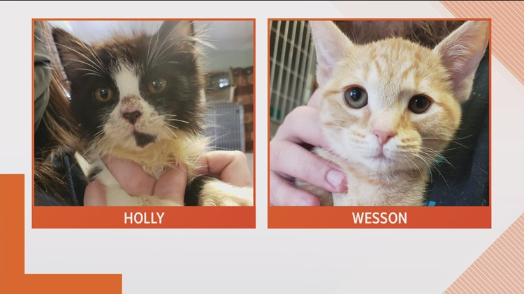 KREM 2's Pick of the Litter: Holly and Wesson