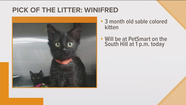 KREM 2's Pick of the Litter: Winifred
