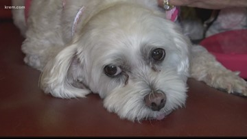 Spokane man protecting pets after owners die through life insurance