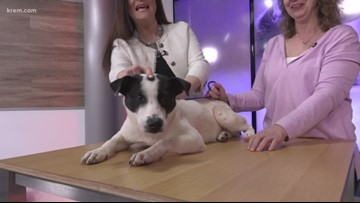 Meet this week's Pick of the Litter, Dax!
