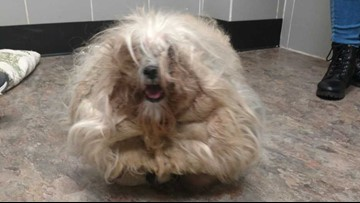 Community raises nearly $3K for three dogs trapped under matted fur
