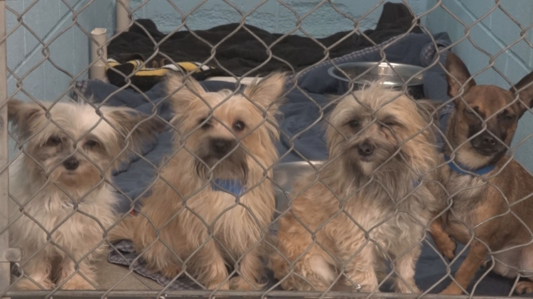 'My heart just dropped': 85 dogs found abandoned in North Idaho home