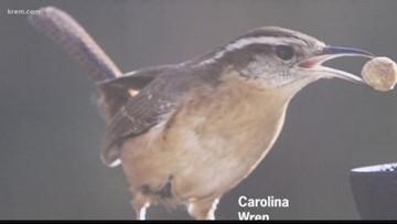 Bird preservation begins with humans, raptor expert says