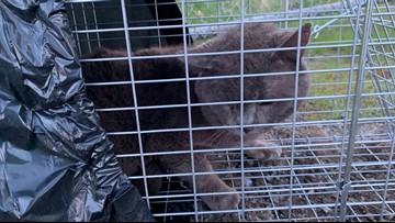 Spokane coalition aims to rehabilitate hundreds of feral cats
