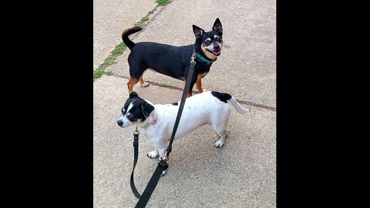 PHOTOS: KREM viewers' pups on National Dog Day