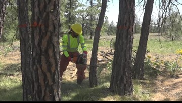 Fire crews thin out Cheney field to prepare for wildfire season