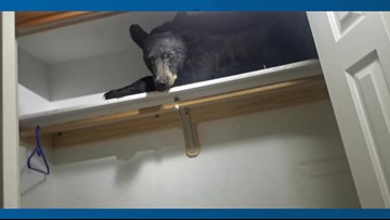 Bear locks himself in Missoula home, naps in closet