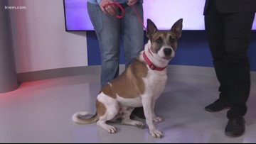 Meet this week's Pick of the Litter, Crumble!