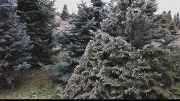 Here's where you can get rid of your Christmas tree in Spokane