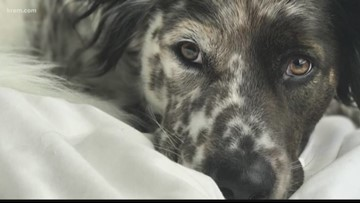 Washington Trust Bank donates $50K in honor of Spokane dog, Hank