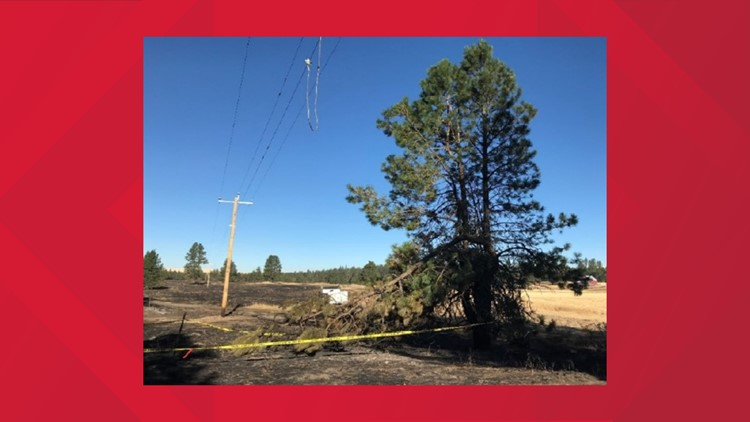 DNR report: Babb Fire was sparked by branch from diseased tree that fell on powerline
