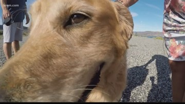 Grand Coulee community helps find dog lost in wilderness