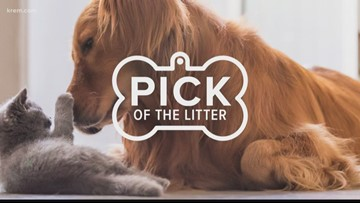 Pick of the litter October 29, 2019
