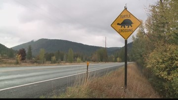 No more 'turtle crossing' signs in Sandpoint after thefts