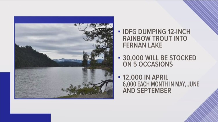 Idaho Fish and Game will dump 12K rainbow trout into Fernan Lake in April
