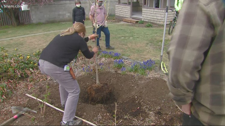 The Lands Council planted trees in Spokane neighborhoods Friday