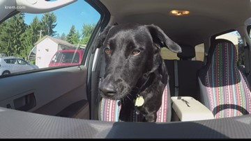 What to do if you see animals in a hot car in Washington, Idaho