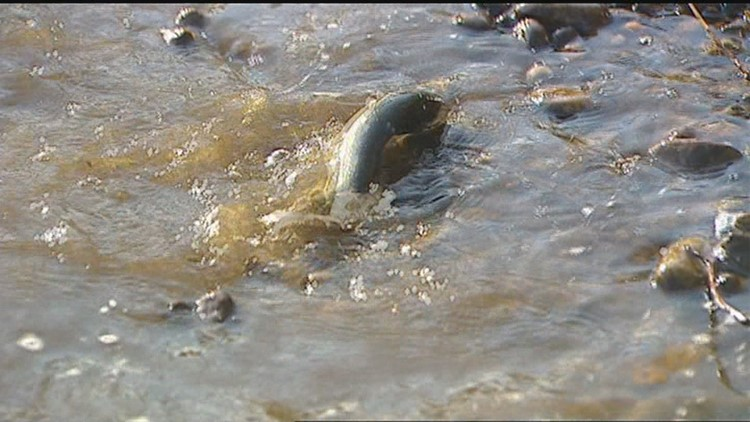 50,000 rainbow trout to be stocked in southwest Idaho waters