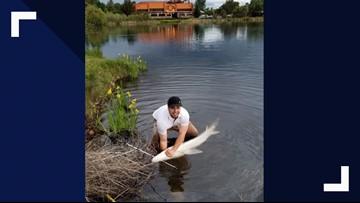 'It was insane:' Boise fisherman catches massive sturgeon in Parkcenter Pond