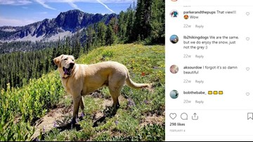 Boise dog is a star on social media, attracting followers and fans from all over the world