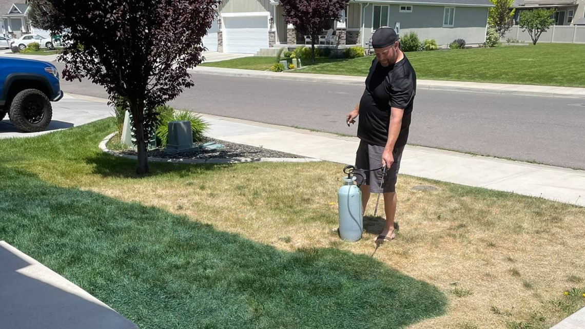Fed up with a dead and yellow lawn, Idaho couple paints their grass green